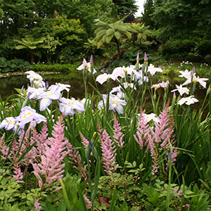 Products - Fine-art-tours-ayrlies-spring.jpg
